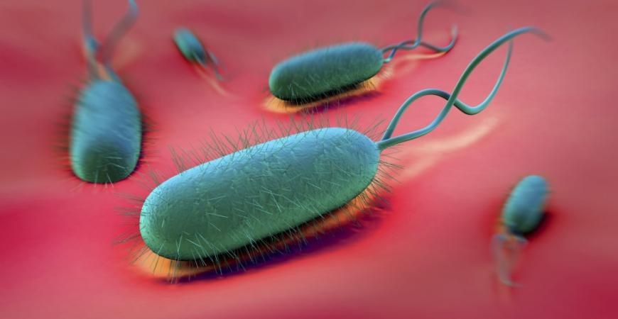 Helicobacter pylori - čo to je a ako sa ho zbaviť?